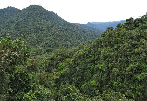 .....über den Dschungel.