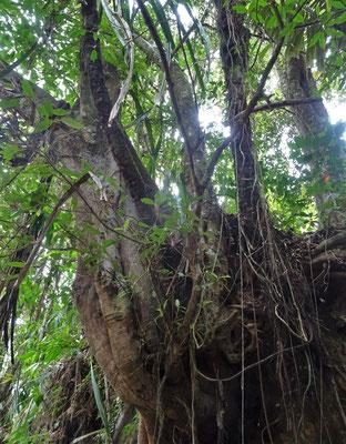 ...und der Dschungel...
