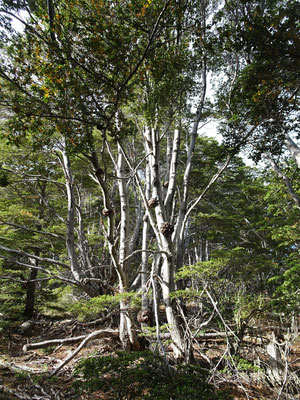 .....durch den südlichsten Wald.....