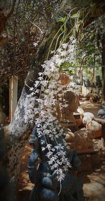 Orchideen über Ganesh