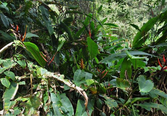 ...durch den Dschungel.