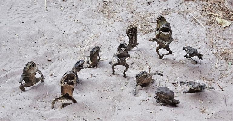Getrocknete Frosch-Kunst.