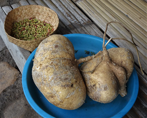 .....eine Art Kartoffel.