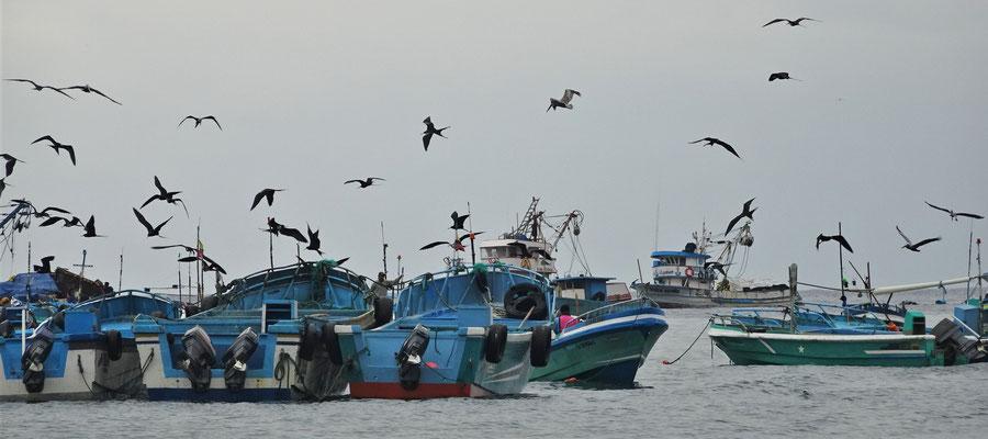 .....mit den Fischerbooten und.....