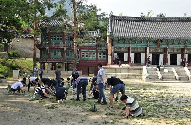 Freiwillige Arbeit für den Palast.