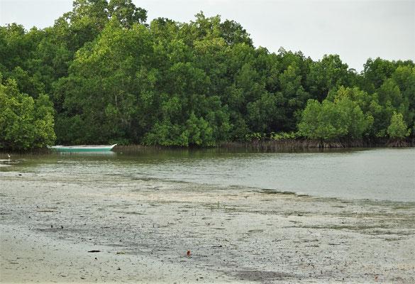 ....mit dem Mangroven Wald.