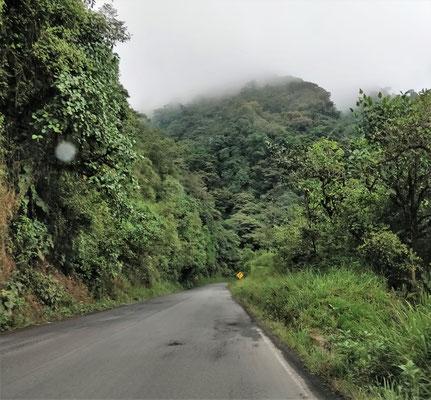 Die Strasse durch den Dschungel nach Mindo.