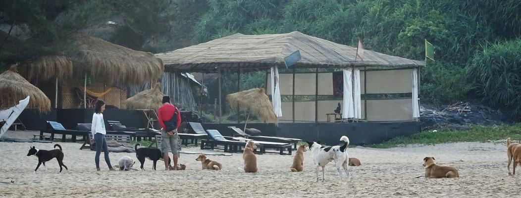 Diese Hundemeute begleitet...