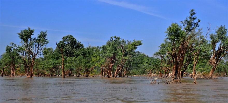....zu den 3 Irawady Delfine.