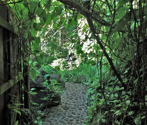 Der Weg durch den Dschungel.....