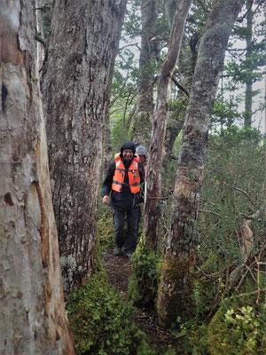 Durch den Wald....