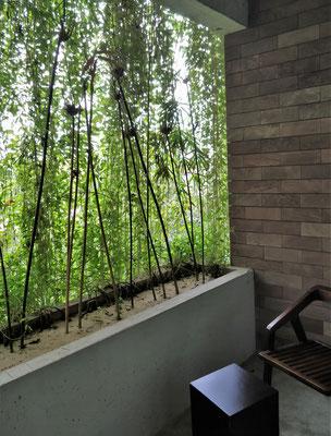 Unser grüner Balkon.....