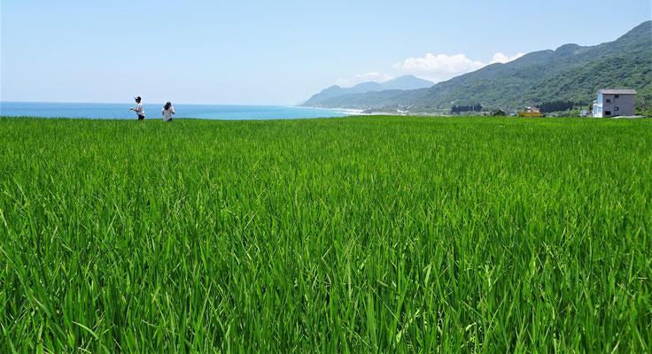 .....über die Reisfelder hinweg.