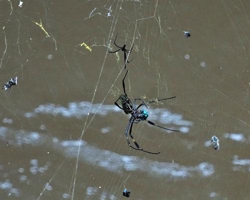 Auch sehr viele grosse Spinnen.....