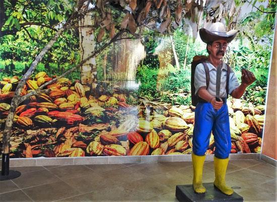 Cacao, ein wichter Exportartikel....