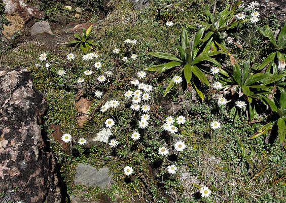 Blumen am Wegesrand.