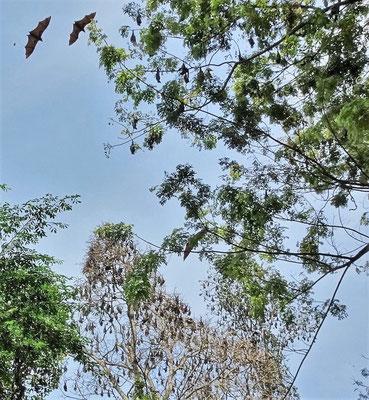 ...hängen in den Bäumen.