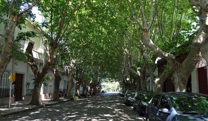 Viele Bäume entlang....