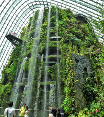 Die Halle des Cloud Forest....