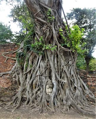 ......mit dem Buddha Kopf....