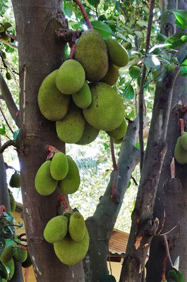 ...mit vielen Früchten.