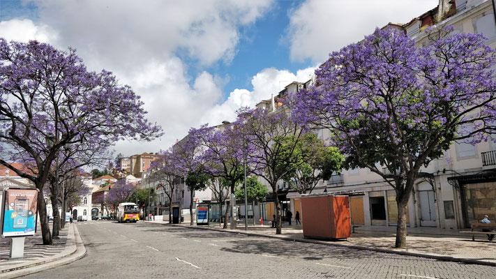 Der Platz Dom Pedro IV.....