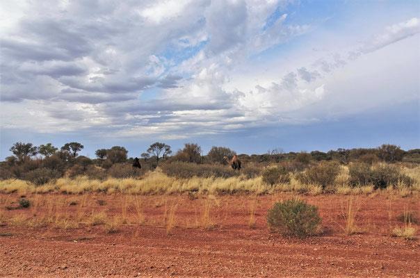 Auf der Fahrt zum Uluru......