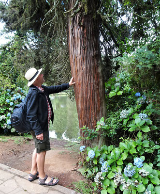....dem alten Baumbestand.....
