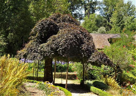 .....einen schönen Garten.