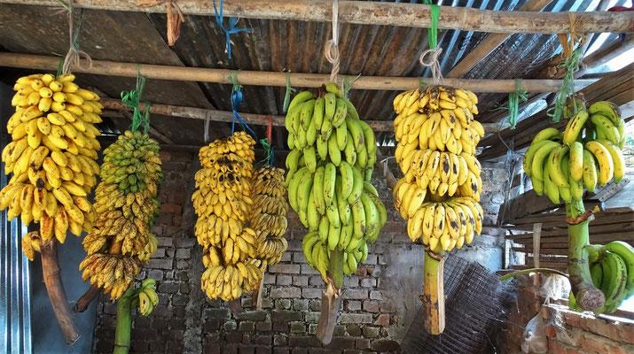 ....verschiedene Bananensorten.