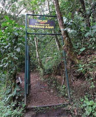 .....den dichten Dschungel....