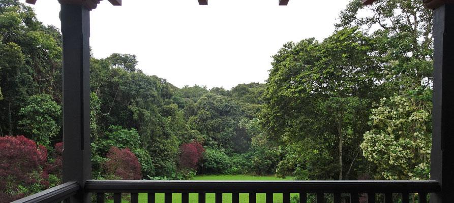 Der Blick in den Dschungel.