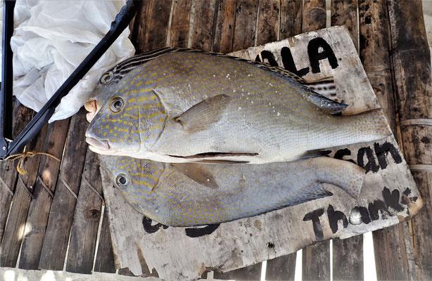 ......und frischem Fisch...