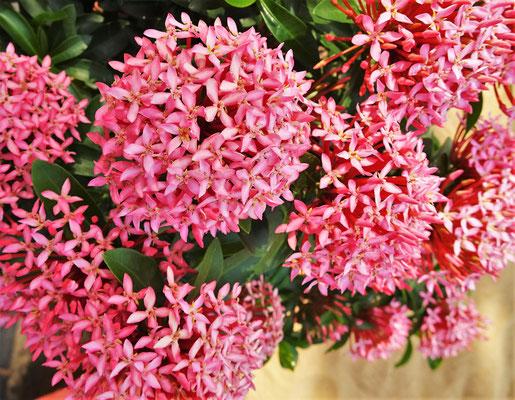 Die Blütenpracht im Garten.....