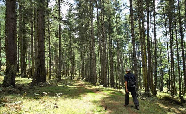 ...durch den Wald...