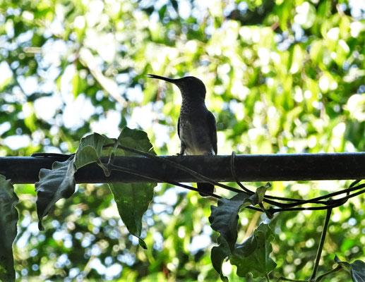 Auch Kolibris kann.....