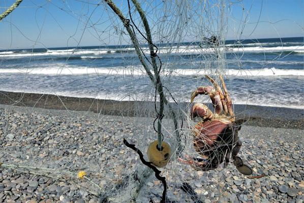 Ein vergessenes Fischernetz mit Inhalt.