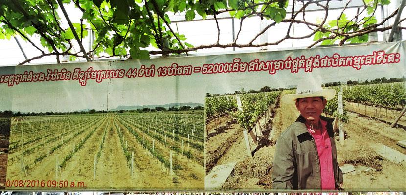 Das einzige Weingut in Kambodscha.