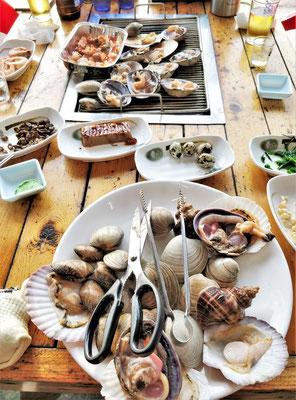 Viele verschiedene Muscheln.....