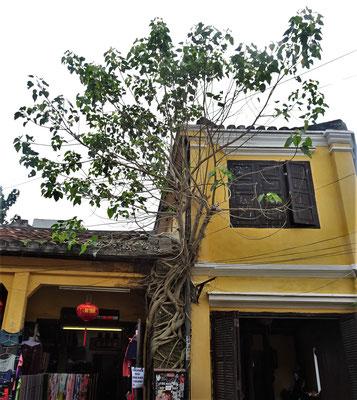 Dieser Baum wächst auf dem Haus.