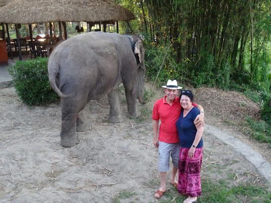 Die Hotelelefanten.......hinten....