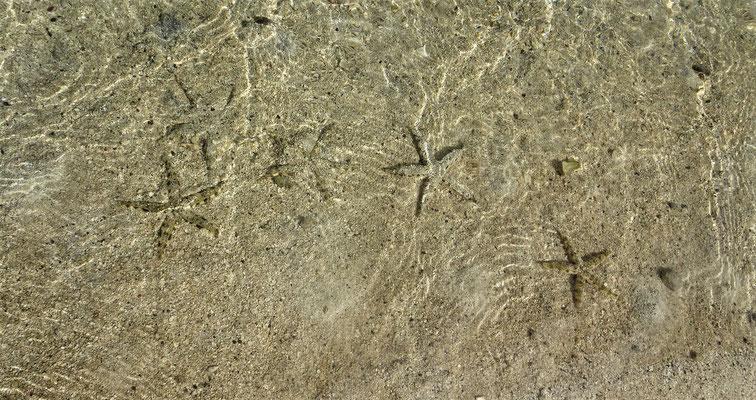 ....mit Seesterne in Ufernähe....