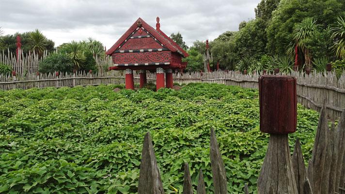 Der Maori Garten....