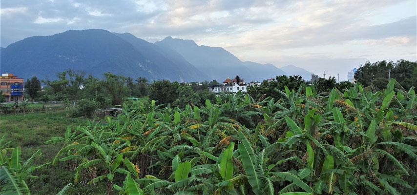 Der Blick vom Balkon zu den verwilderten Bananenplantagen.
