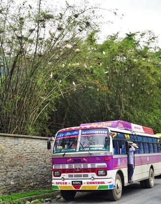 Vogelkolonie im Bambuswald......