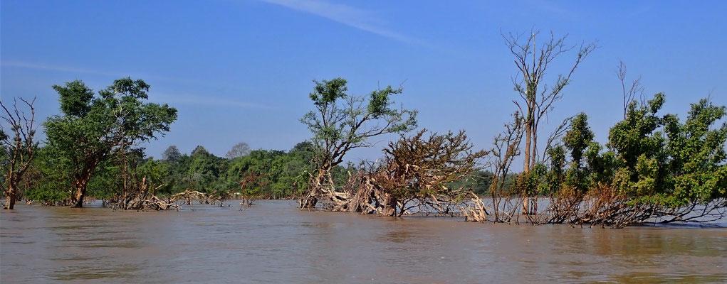 .......Flusslandschaft.....