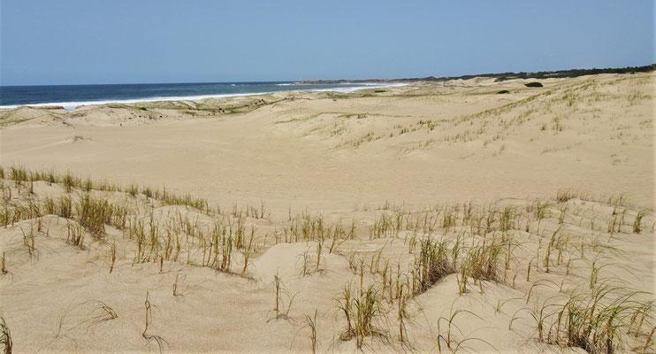 """Die Dünen beim """"wilden"""" Strand...."""
