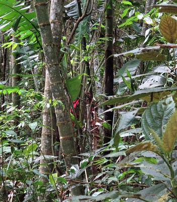 ......Dschungel fand man die Skulpturen.