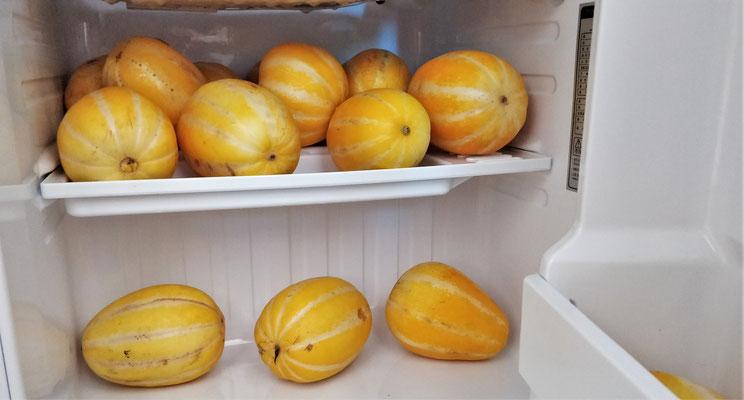 ....die wir dann im Zimmerkühlschrank lagerten.