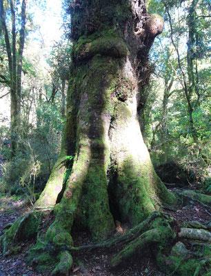 Hier hat sich ein Elefant in einen Baum verwandelt.